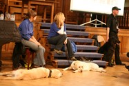 The guide dogs and their handlers