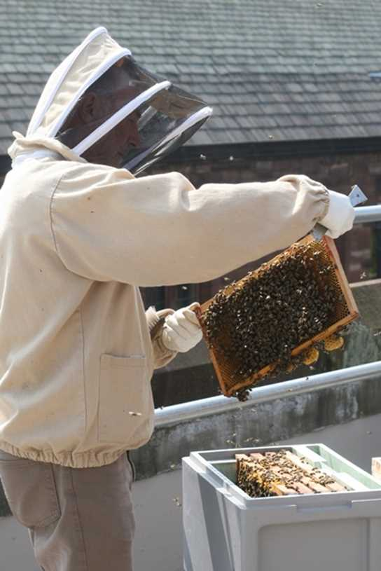 Keith checks a comb before placing it into the hive