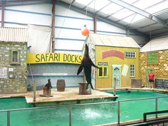 We even got to see the Sea Lion Show