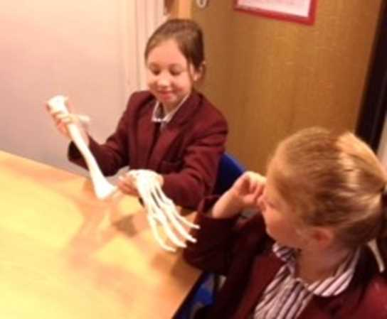 The girls were excited to examine the skeleton more closely