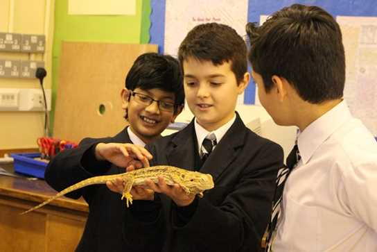 Dexter the bearded dragon is a favourite among the boys