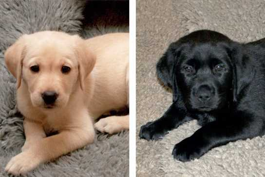 Rolo (left) and Dickens (right) when they were puppies
