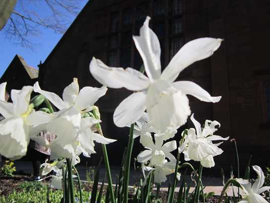 Alex's White Daffodils photos was the competition winner