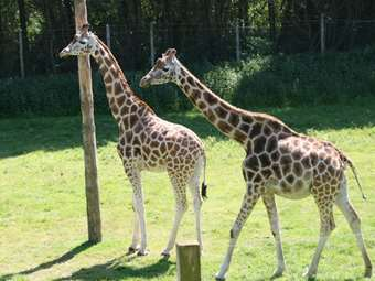 The children loved meeting the very tall giraffes