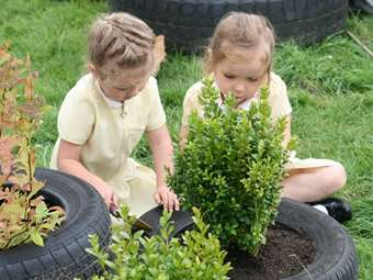 Planting new shrubs