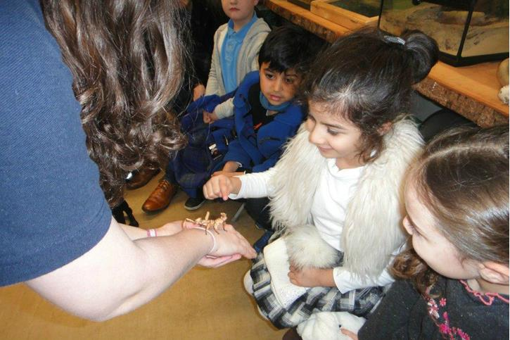 Y1 Visit Knowsley Safari Park - Girls with stick insect