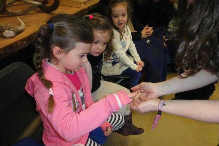 Y1 Visit Knowsley Safari Park - Girl stroking stick insect