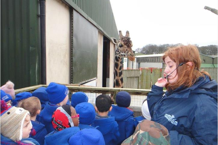 Y1 Visit Knowsley Safari Park - Pupils with giraffes
