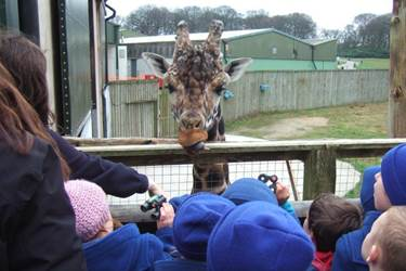 Y1 Visit Knowsley Safari Park - Close up to the giraffes