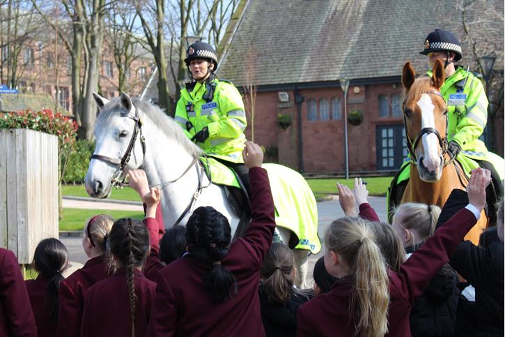 Police Horses Questions