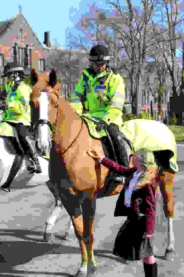 Police Horses Stroking Bumble