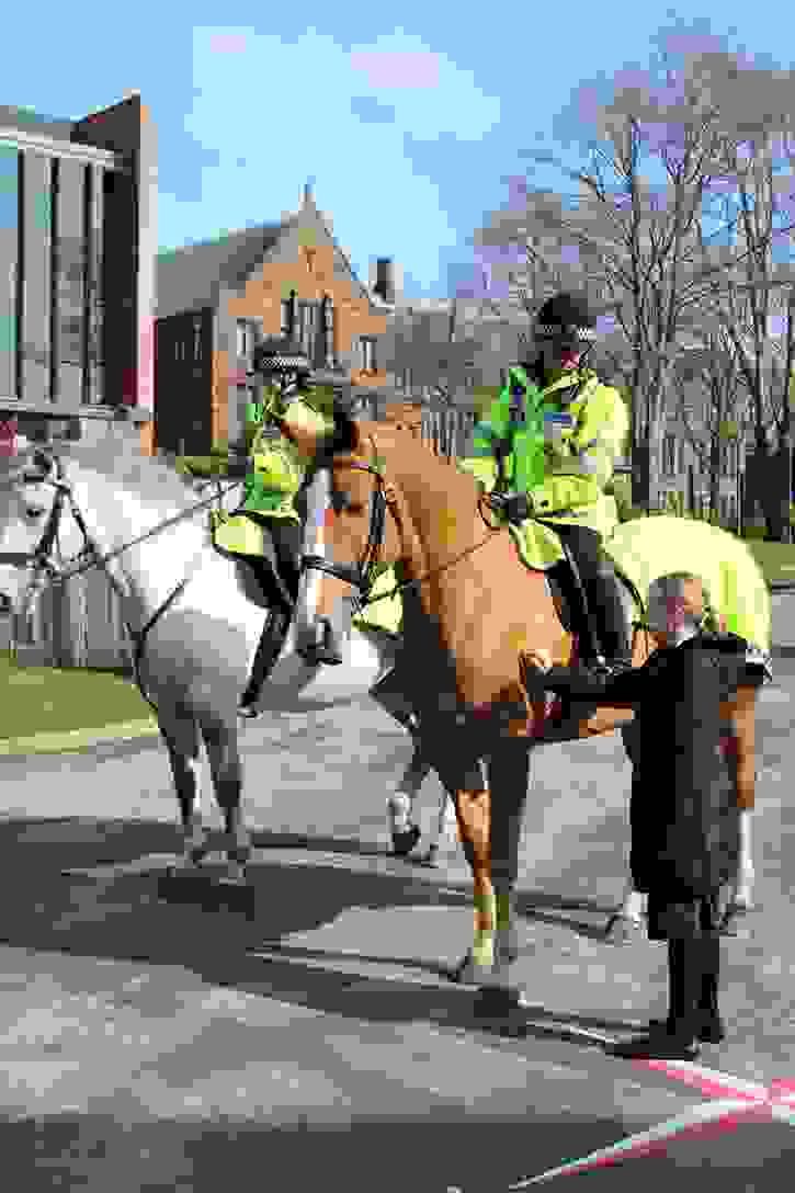 Police Horses A girl meets Bumble