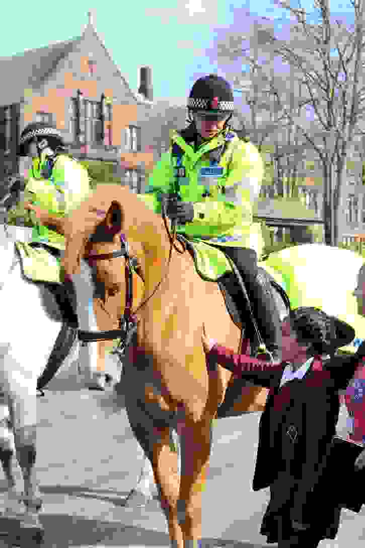 Police Horses Meeting Bumble