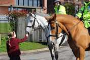 Police Horses Stroking Maxwell