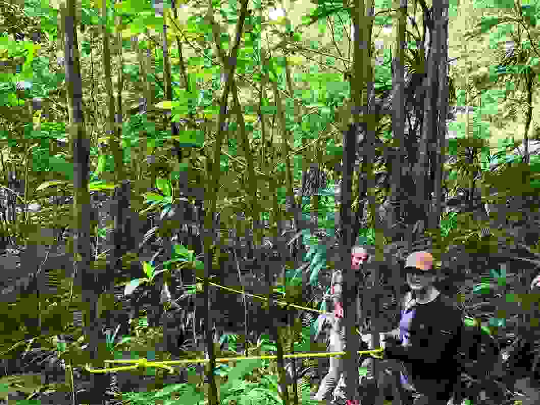 Operation Wallacea - working in the forest