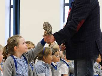 Lancashire Hawks and Owls girl stroking little owl