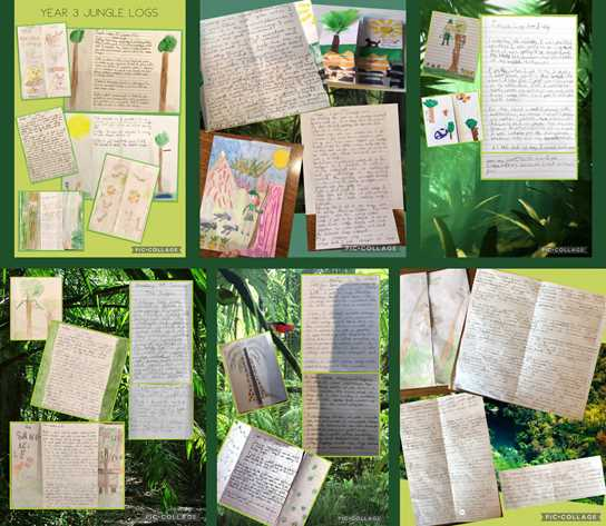 Y3 written logs about the jungle